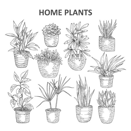 Set of hand drawn vector indoor plants. Flower in the pots in cartoon sketsh style for flyer, logo, icon, banner