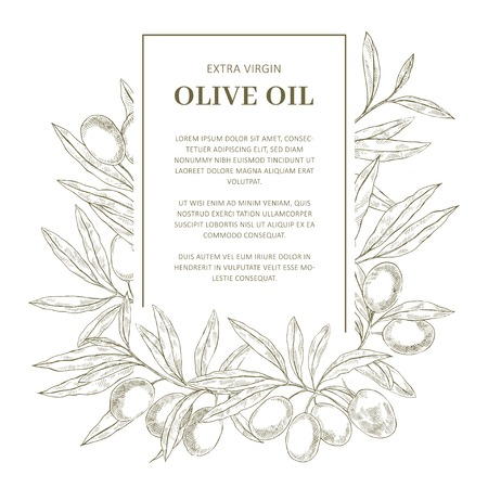 Hand drawn sketch retro olive oil label vector template with place for text