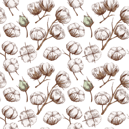 Hand drawn seamless pattern with cotton branches in vintage style. Botanical eco illustration. Vettoriali