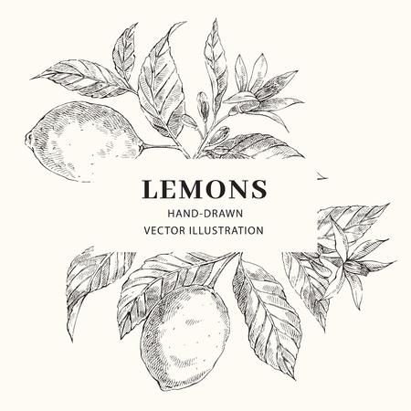 Lemon hand drawn crosshatch vector frame layout. leaves, flowers rectangular border with text space. Citrus fruits poster, web banner design. Engraving style botanical illustration. Ink brush drawing Ilustracja