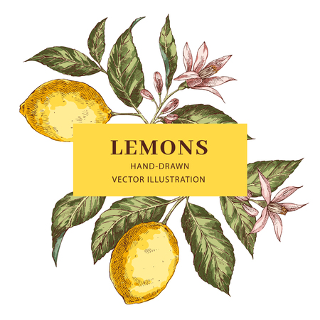 Lemon hand drawn vector frame layout. Realistic leaves, flowers rectangular border with text space. Citrus fruits poster, web banner design. Engraving style botanical illustration. Ink brush drawing Ilustracja