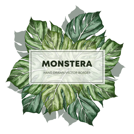 Monstera design hand drawn poster template. Swiss cheese plant leaves with copyspace. Sketch philodendron border, frame for text. Houseplant sketch drawing. Plant exhibition banner design layout Ilustracja