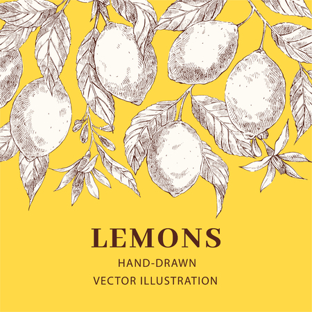 Lemons hand drawn vector poster template. Sketch leaves, flowers web banner design with text space. Sketch exotic citrus fruits. Engraving style botanical, floral illustration. Ink brush drawing Ilustracja