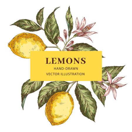 Lemon hand drawn vector frame layout