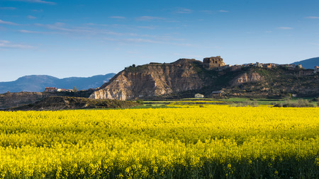 Rapeseed field with the village Bolea in the background on the hill Huesca Aragon Spain. Stock Photo