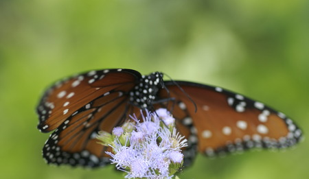 Monarch butterfly hovering over flower-intentionally blurry