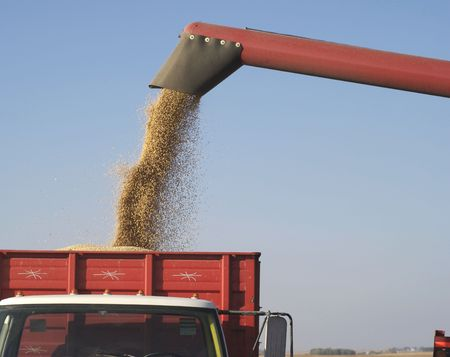 replaceable: Fall Harvest: Combining soybeans