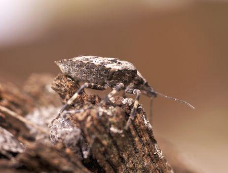 tufo: F�tidas Bug