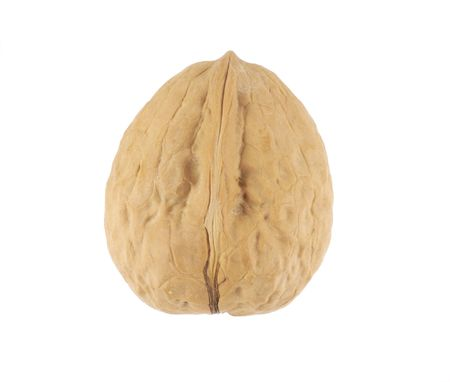 Image of walnut in its shell isolated on white back ground.