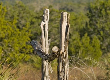 Cedar hek post trail marker in Hill Country State Natural Area, Bandera Texas. Stockfoto