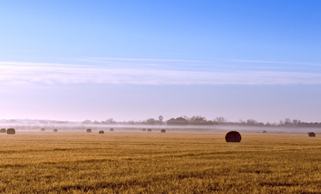 Early morning fog covering Texas hayfield of round bales with windmill in background  photo