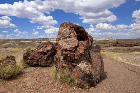 petrified: Petrified Logs-Petrified Forest National Park, Arizona.
