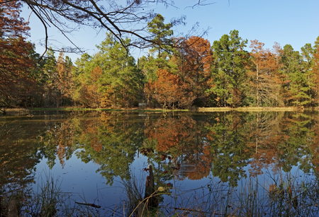 Reflections on a pond at W G Jones State Forest, Conroe, Texas.