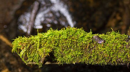 Old tree cover by moss in the mountain