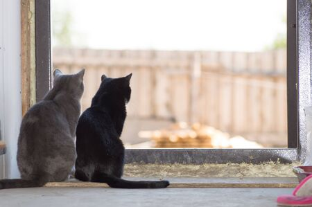 two cats gray and black looking through door waiting for owners