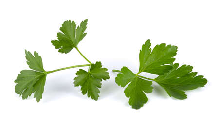 Fresh green leaves of parsley isolated on white background