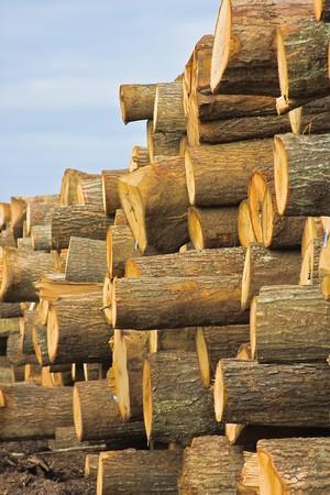 sawmill: Logs at sawmill