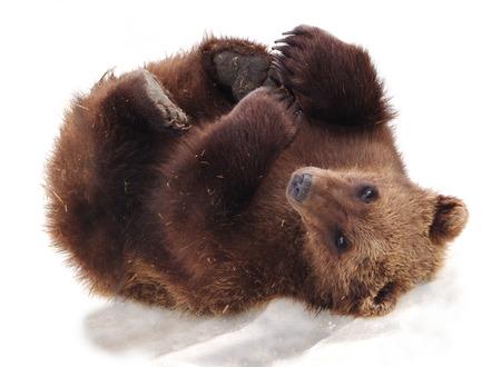 endearing:  Furry Alaskan,  Brown bear cub on snow