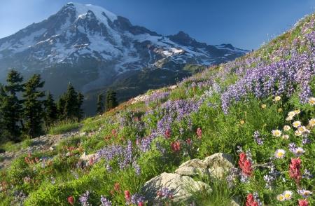 Wildlflower Mountain, Mt  Rainier seen from Plumber Peak