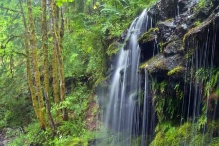 Forest Waterfall Standard-Bild