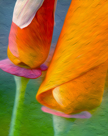California Poppies : Oil Painting Photographic Art