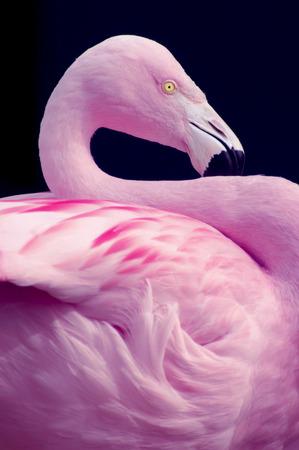 Flamingo Side Perspective