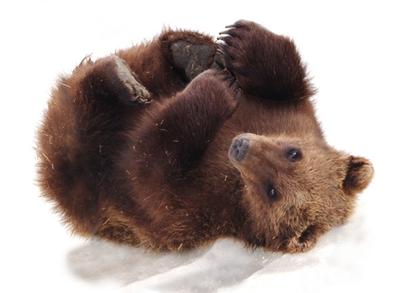 cubs: Bear Cub on Snow Stock Photo
