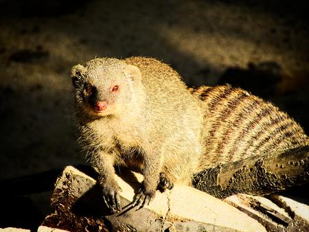 opossum: Opossum
