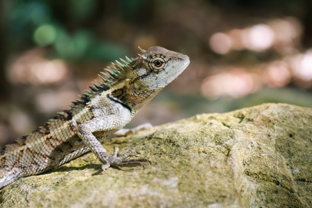 Lizards and other cold-blooded critters bask in the sun to keep warm