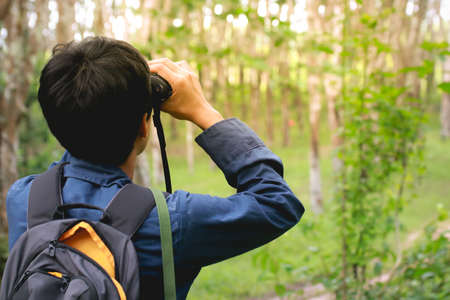 Bird watching in rubber plantation Stock Photo