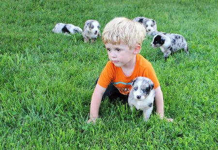 alongside: Toddler pretending to be a puppy alongside an australian shepherd puppy  Stock Photo