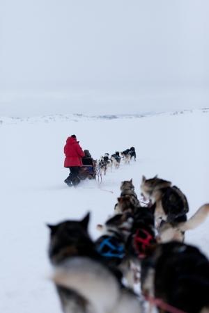 esquimales: Husky trineos tirados por perros de carreras Foto de archivo