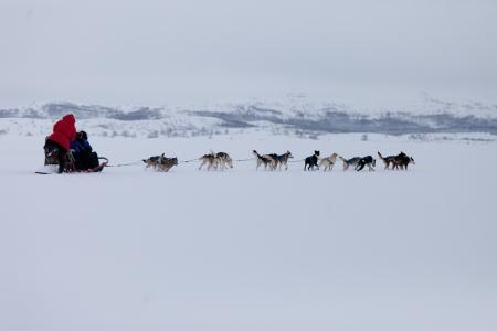 Husky Hundeschlitten-Rennen Standard-Bild - 14615335