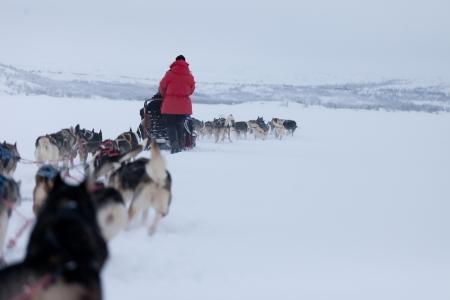Husky dogsleds racing Stock Photo - 14615338