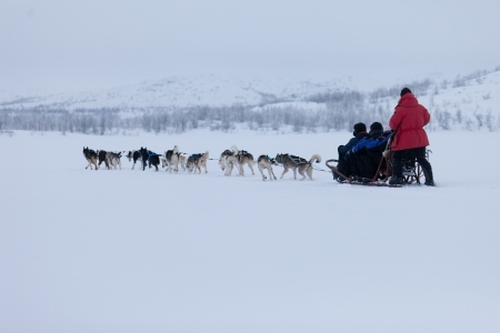 Husky dogsleds racing Stock Photo