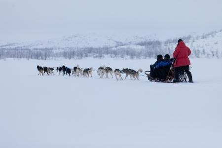 Husky dogsleds racing Stok Fotoğraf