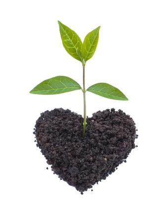 germinación: Green Eco amor