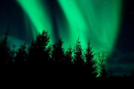 Nordlichter über einem Wald Standard-Bild - 14598120