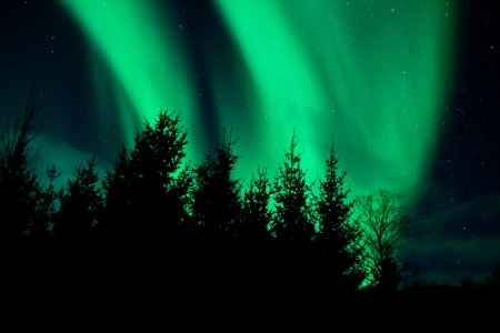 Northern lights above a forest