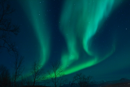 Aurora Borealis  Northern lights  swirling in the sky photo