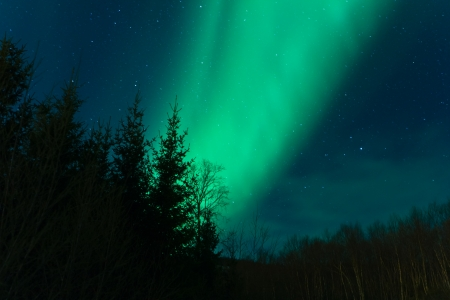 Northern lights  Aurora Borealis  over a forest photo