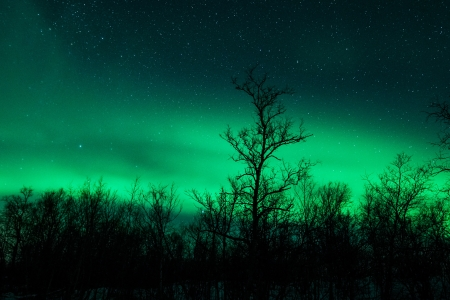 polaris: Northern lights above a forest in Sweden Stock Photo