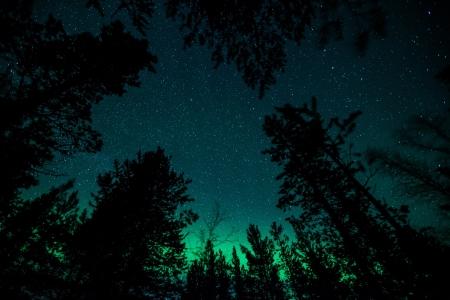 Northern lights above a forest in Sweden Stock Photo