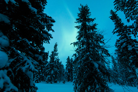 arctic zone: Northern lights in Finland forest Stock Photo