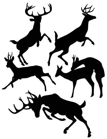 venado: ciervo