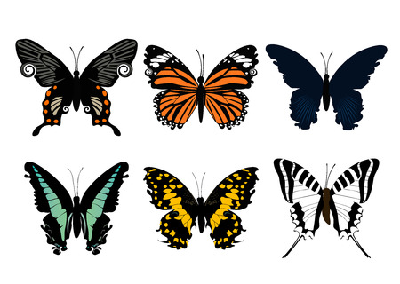 butterfly Stock Vector - 5985273