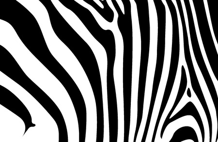 zebra Stock Vector - 6154364
