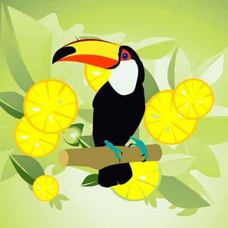 panama: birds Illustration
