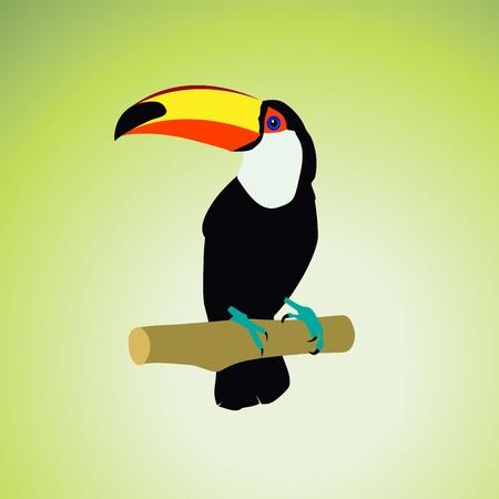 keel: birds Illustration