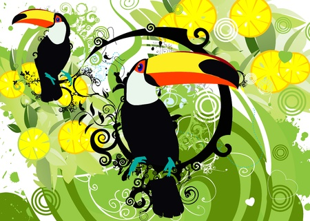 panama: toucan Illustration